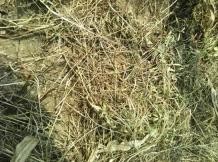 牡丹除草剂